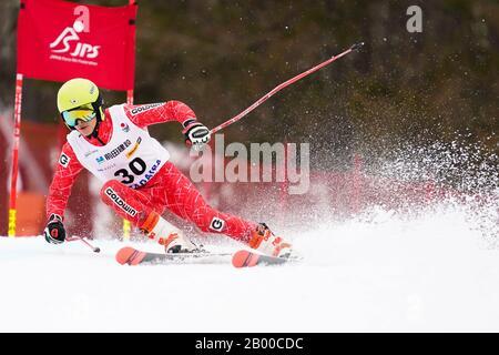 Ueda, Nagano, Japan. 14th Feb, 2020. Yusuke Murata (JPN), February 14, 2020 - Alpine Skiing : Men's Giant Slalom Deaf at Sugadaira Pine Beak during 2020 World Para Alpine Skiing Asia Cup in Ueda, Nagano, Japan. Credit: SportsPressJP/AFLO/Alamy Live News - Stock Photo