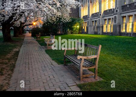 WA17181-00...WASHINGTON - Cherry trees in bloom near the Smith Building at the University Of Washington in Seattle.