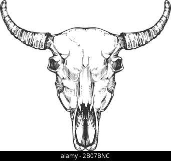 Vintage buffalo skull vector sketch. Bull animal head bones in hand drawn style. Cow head with horn illustration - Stock Photo
