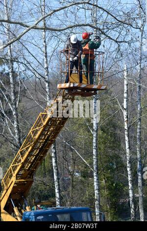 Arborists cut branches of a tree with chainsaw using truck-mounted lift. February 10, 2020. Kiev, Ukraine - Stock Photo