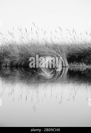 Lake and river landscape. Reef reflection in water, mocnochrome and geometric picture, taken in the okovango river delta, botswana - Stock Photo