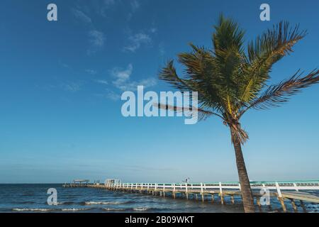 PINE ISLAND, FLORIDA - JAN 17, 2020. Wind whips up palm tree in front of Bokeelia pier. - Stock Photo