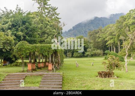 Scenery of Kebun Raya Bali - Bali Botanical Garden in Bedugul, Tabanan, Bali, Indonesia.
