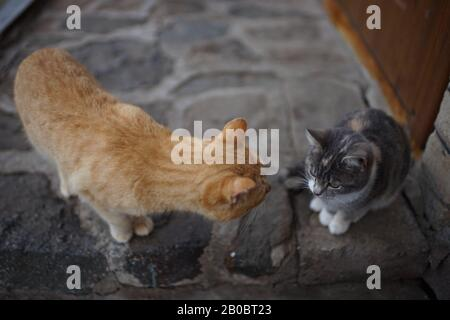 Communication of two cats in the yard. Ginger cat and young grey kitty kitten.