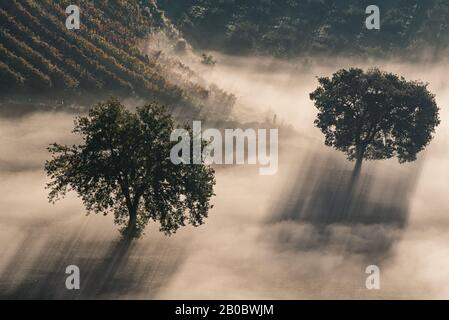 Two trees in the beautiful sunny fog at sunrise, natural background with sun rays through the mist - Stock Photo