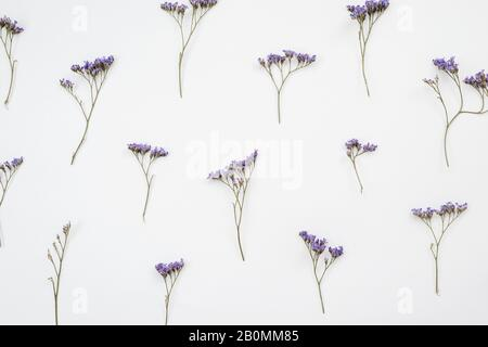Dried flowers on white background. autumn flat lay wallpaper, top view - Stock Photo