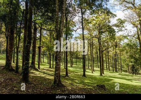 Trees at Kebun Raya Bali - Bali Botanical Garden in Bedugul, Tabanan, Bali, Indonesia.