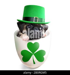 Pug puppy dog inside a mug wearing a leprechaun hat isolated on white background. Saint Patrick's Day theme concept. - Stock Photo