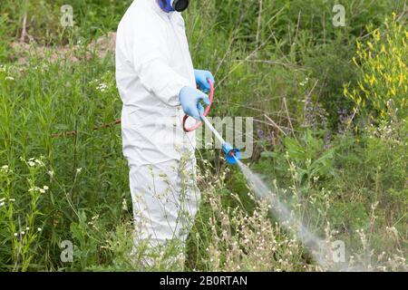Worker in protective workwear spraying herbicide on ambrosia - Stock Photo