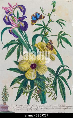 Ketmia and Irises Engraving, hand-colored print of plants and butterflies from Plantae et papiliones rariores (rare plants and butterflies) by Ehret, - Stock Photo