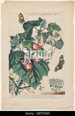Martynia Engraving, hand-colored print of plants and butterflies from Plantae et papiliones rariores (rare plants and butterflies) by Ehret, Georg Dionysius, 1708-1770 Published in London in 1748