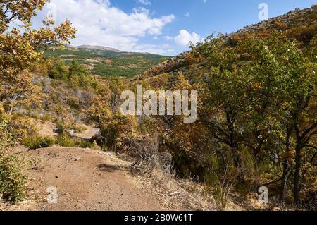 Senda de Carretas trail path in autumn in Hayedo de Tejera Negra (Parque Natural Sierra Norte de Guadalajara, Cantalojas, Castilla-La Mancha, Spain) - Stock Photo