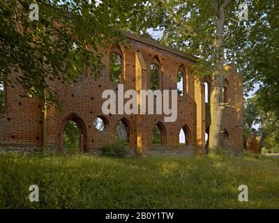 Monastery ruins Boitzenburg, Uckermark, Brandenburg, Germany, - Stock Photo