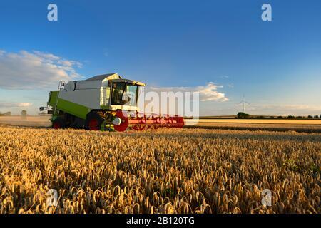 Grain harvest, combine harvester in wheat field, Saalekreis, Saxony-Anhalt, Germany - Stock Photo
