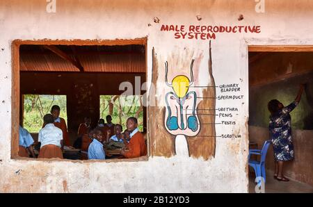 Biology lesson in a classroom of a primary school near Voi in Southern Kenya - Stock Photo