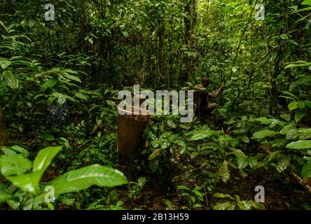 Life of the Bayaka Pygmies in the Equatorial Rainforest,Central African Republic,Africa - Stock Photo