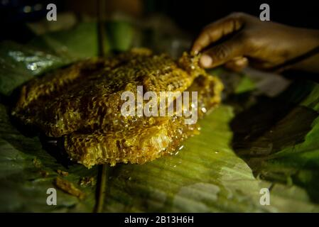 The life of the Bayaka Pygmies in the Equatorial Rainforest,Central African Republic,Africa - Stock Photo