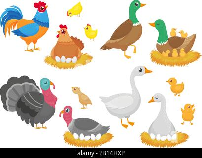 Farm birds. Poultry chicken, goose duck bird and turkey family nest isolated cartoon vector set - Stock Photo