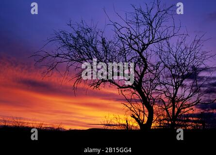 Snag sunrise, Agua Fria National Monument, Arizona - Stock Photo