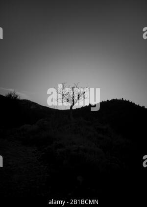 lonely tree in the middle of a hill, black and white - Stock Photo