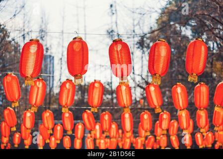 Red chinese lanterns hanging in a park for the chinese new year