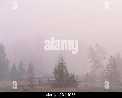 Pine trees and wood fence in dense morning fog. - Stock Photo