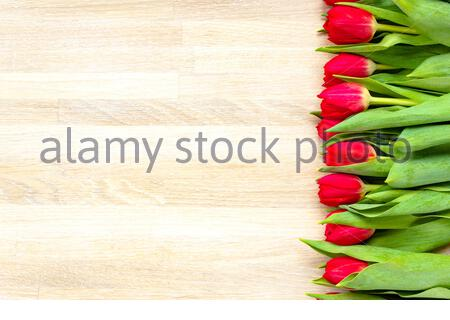 Red tulip flowers border row gift for holiday March 8 international Women's Day top above view - Stock Photo