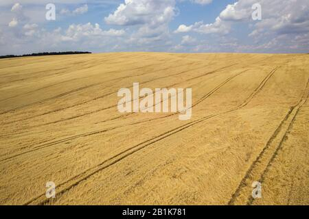Aerial view of yellow agriculture wheat field ready to be harvested in late summer. - Stock Photo