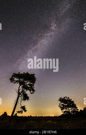 starry sky with milky way over the moor, trees in foreground, 07.09.2016, Germany, Lower Saxony, Voerden - Stock Photo