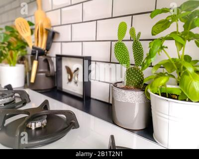 Black and white subway tiled kitchen with numerous plants and framed taxidermy insect art - Stock Photo