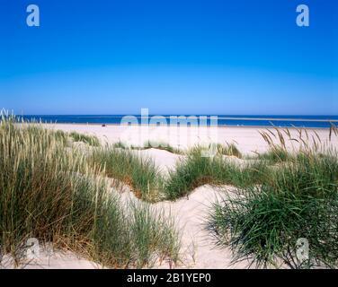 Beach and dunes, Terschelling island, North Sea, Frisia, Netherlands, Europe
