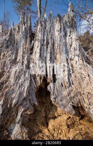 Rotten stump in Bohinj valley