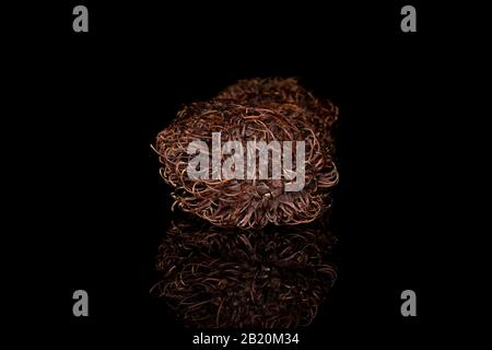 One whole old brown rambutan isolated on black glass - Stock Photo