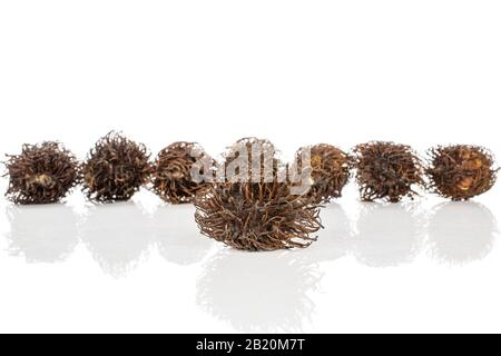 Group of eight whole old brown rambutan isolated on white background - Stock Photo