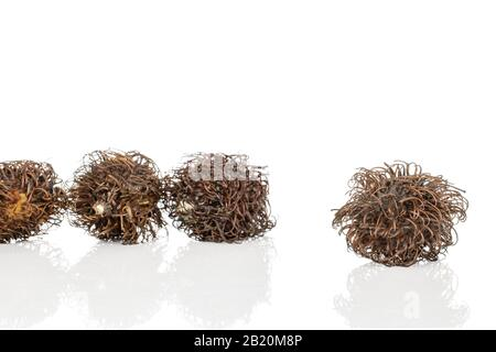 Group of four whole old brown rambutan isolated on white background - Stock Photo