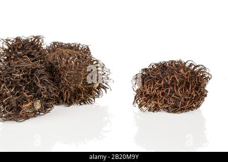 Group of five whole old brown rambutan isolated on white background - Stock Photo