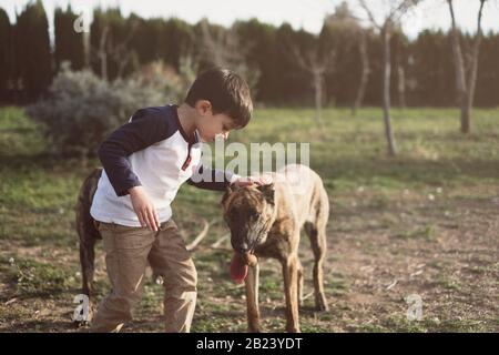 Child kindly caresses his dog in backyard - Stock Photo