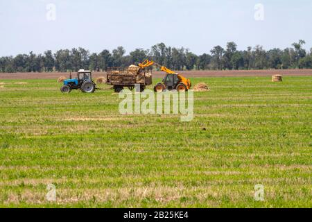 An agricultural tractor loader loads bales of hay into a tractor trailer on the field - Stock Photo