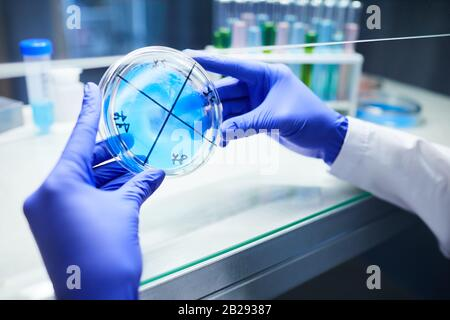 Close up of scientist with gloved hands holding petri dish while working on bio research in laboratory, copy space