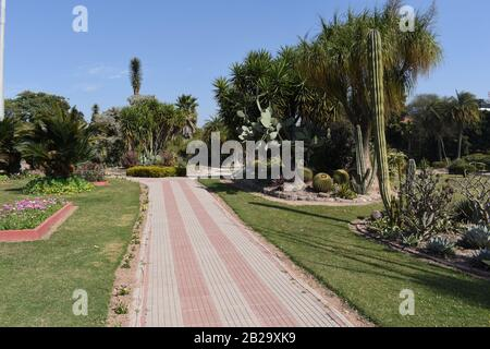 A walkway in the middle of a Cactus Garden. - Stock Photo
