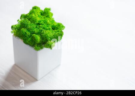 Green moss in pots on white background - Stock Photo
