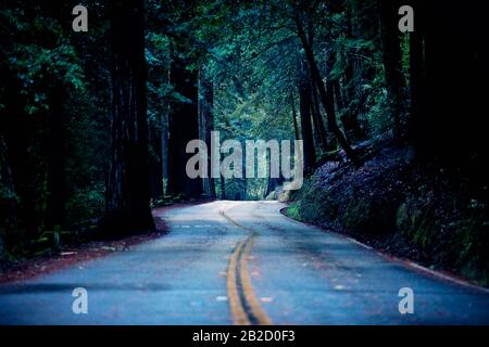 View of road in Big Basin Redwoods State Park, California, United States. - Stock Photo