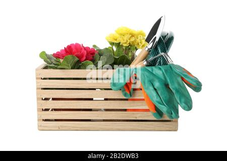 Box with gardening tools and flowers isolated on white background - Stock Photo