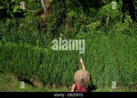Young girl wearing a straw hat pointing on a rice terrace in Bali - Stock Photo