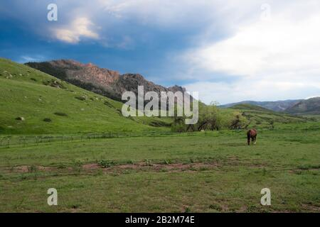 A contrasting late afternoon sky over the Colorado Rocky Mountains with a lone brown horse grazing in a field - Stock Photo