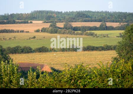 fields on rolling hills, Napton on the Hill, near Rugby, Warwickshire, England - Stock Photo
