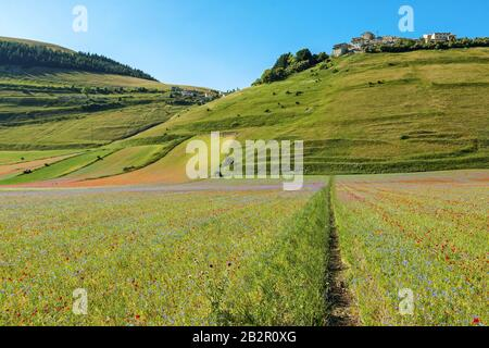 Castelluccio in a blooming field of poppies, umbria -  Italy - Stock Photo
