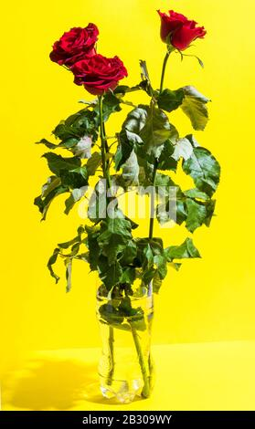 Happy Mother's Day, Red roses for women in vase. Vertical composition. Yellow backgroundand copy space. - Stock Photo