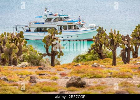 Ecuador, Galapagos archipelago, listed as World Heritage by UNESCO, Santa Cruz Island, naturalist cruise ship at anchor, Plaza Sud Island and its Galapagos Barbary Fig trees (Opuntia echios) in the foreground - Stock Photo