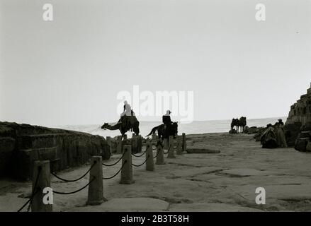 Travel Photography - Camels for tourists at the Pyramids of Giza Cairo Egypt in North Africa Middle East - Serenity Night Stillness Ethereal - Stock Photo